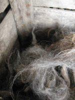 Ξασμένο πρόβειο μαλλί